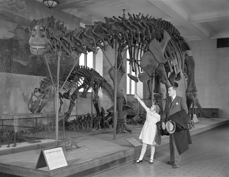 Dinosaurs And Dime Museums Exhibiting The Past