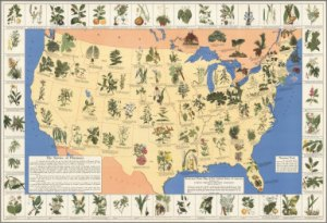 Medicinal map of the US